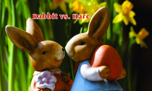 Difference Between Rabbit and Hare