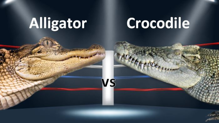 alligator crocodile comparison